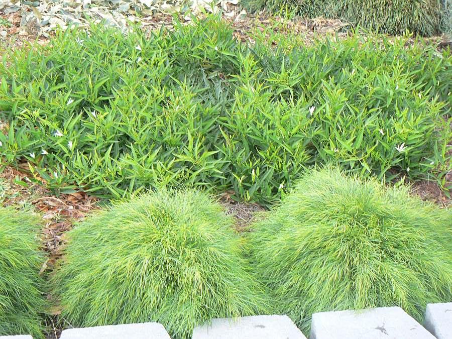 Gondwana Nursery Native plant gardens