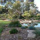 Outstanding pond surrounded by native plants