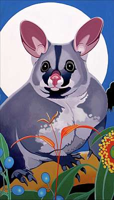Brushtail Possum Fine Art Prints