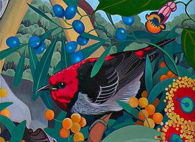 Scarlet Honeyeater Fine Art Prints